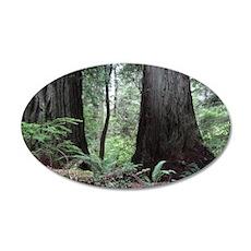 Coast Redwoods Rainforest 03 Wall Decal