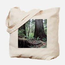 Coast Redwoods Rainforest 03 Tote Bag