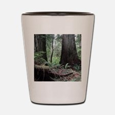 Coast Redwoods Rainforest 03 Shot Glass