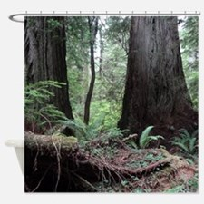 Coast Redwoods Rainforest 03 Shower Curtain