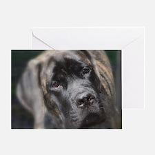 Funny English mastiff Greeting Card