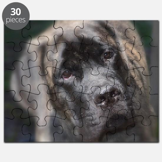 Cute English mastiff Puzzle