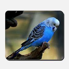 Blue Budgie Mousepad