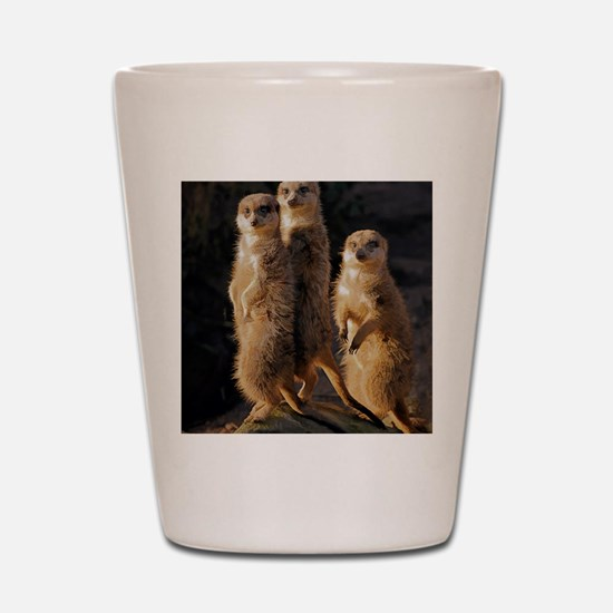 Cool Meerkat Shot Glass