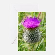 Scottish Thistle Greeting Cards