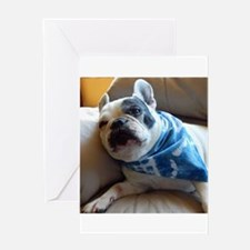 French Bulldog Pied Greeting Cards