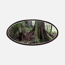 Giant Redwoods Rainforest 04 Patch