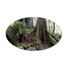 Giant Redwoods Rainforest 04 Wall Decal
