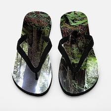 Giant Redwoods Rainforest 04 Flip Flops