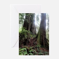 Giant Redwoods Rainforest 04 Greeting Cards