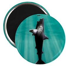 "Cute Sharks 2.25"" Magnet (100 pack)"
