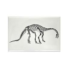 Plateosaurus Rectangle Magnet