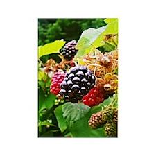 Berries Rectangle Magnet
