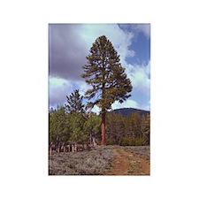 Big Tree Rectangle Magnet