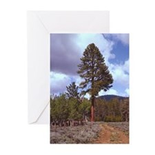 Big Tree Greeting Cards (Pk of 20)