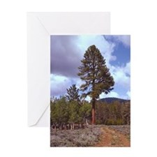 Big Tree Greeting Card