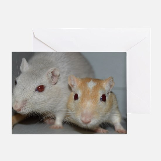 Gerbils Greeting Card