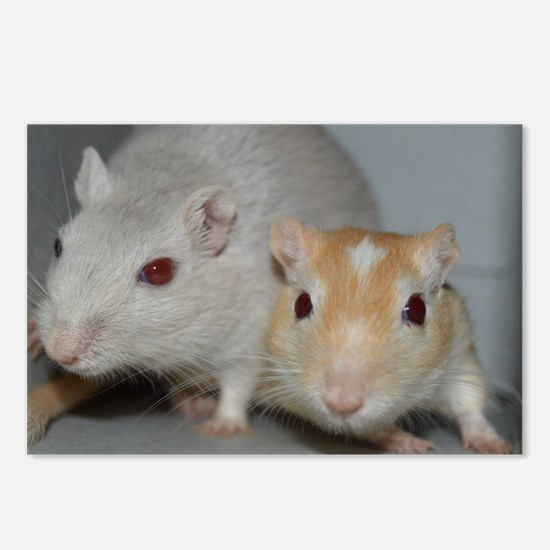 Gerbils Postcards (Package of 8)
