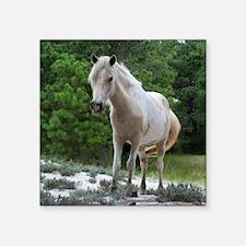 Assateague horse 2 Sticker