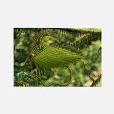 Cute Leaf Dragon Rectangle Magnet