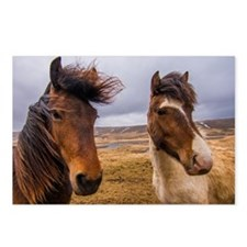 Horses of Iceland Postcards (Package of 8)