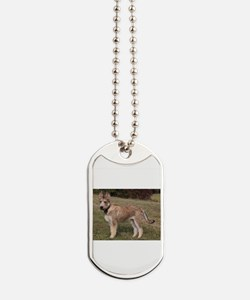 berger picard puppy Dog Tags