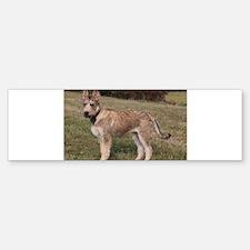 berger picard puppy Bumper Bumper Bumper Sticker