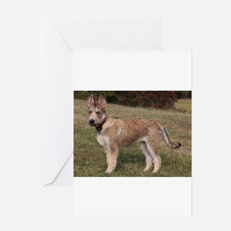 berger picard puppy Greeting Cards