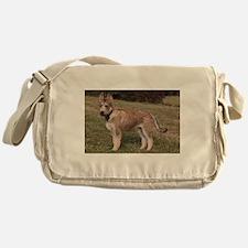 berger picard puppy Messenger Bag