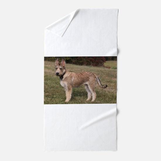berger picard puppy Beach Towel
