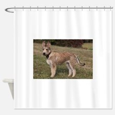 berger picard puppy Shower Curtain