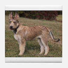 berger picard puppy Tile Coaster