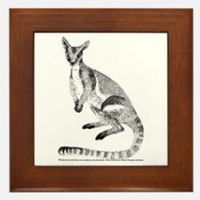 Yellow-footed Rock Wallaby Framed Tile