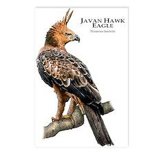 Javan Hawk-Eagle Postcards (Package of 8)