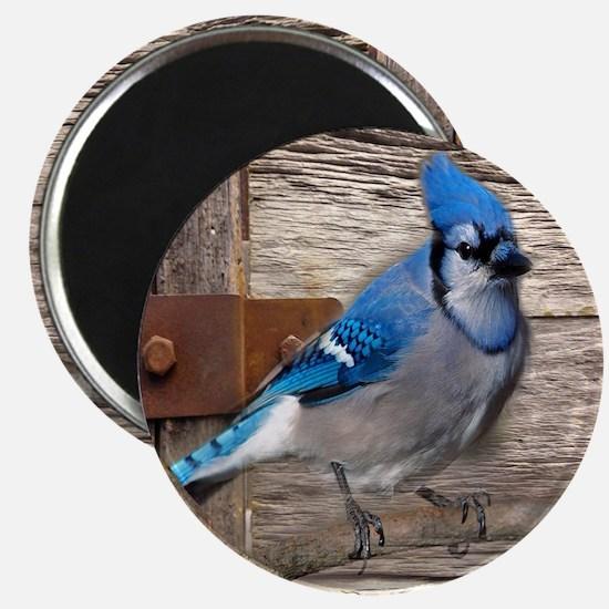 rustic barn wood blue jay Magnet