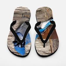 rustic barn wood blue jay Flip Flops