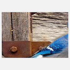 rustic barn wood blue jay