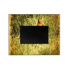 nature wildlife red fox Picture Frame