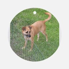 carolina dog full 2 Ornament (Round)
