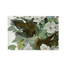 Carolina Pigeon John James Audubon Birds Magnets
