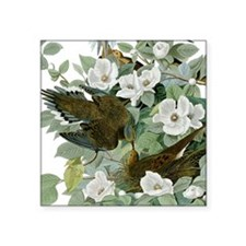 Carolina Pigeon John James Audubon Birds Sticker