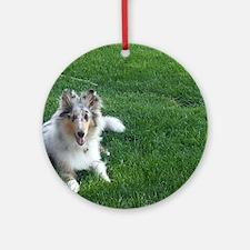 Blue Merle Collie Puppy Round Ornament