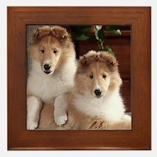 Cute Collie Framed Tile