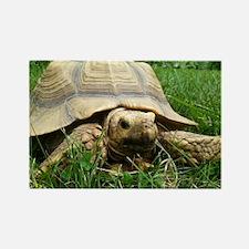 Sulcata Tortoise Rectangle Magnet
