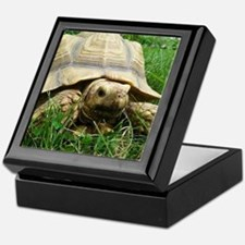 Sulcata Tortoise Keepsake Box