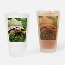 Sulcata Tortoise Drinking Glass