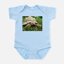 Sulcata Tortoise Body Suit