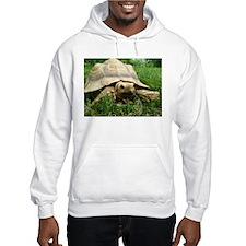 Sulcata Tortoise Hoodie