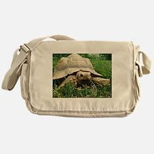 Sulcata Tortoise Messenger Bag