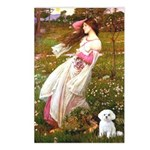 Windflowers / Maltese Postcards (Package of 8)